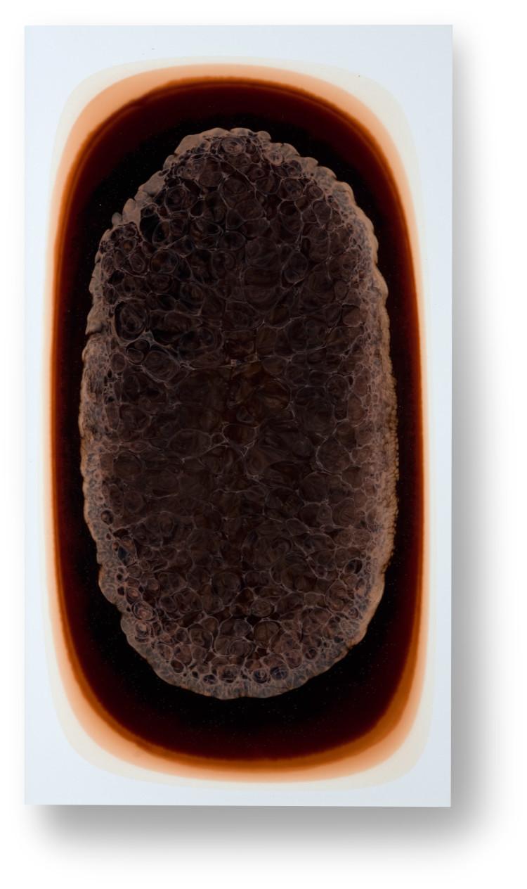 Bez-n†zvu,-2013,-lak,-barviva,-pigmenty-na-pl†tnÿ,-120x60-cm